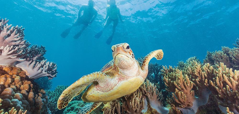 Escape To Cairns Main Image
