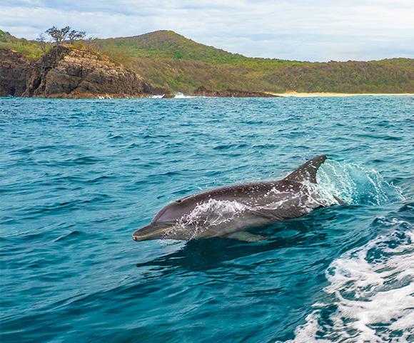 Noosa Lakes Resort With Dolphin Safari Image 1