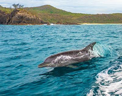 Noosa Lakes Resort With Dolphin Safari - Gallery Image