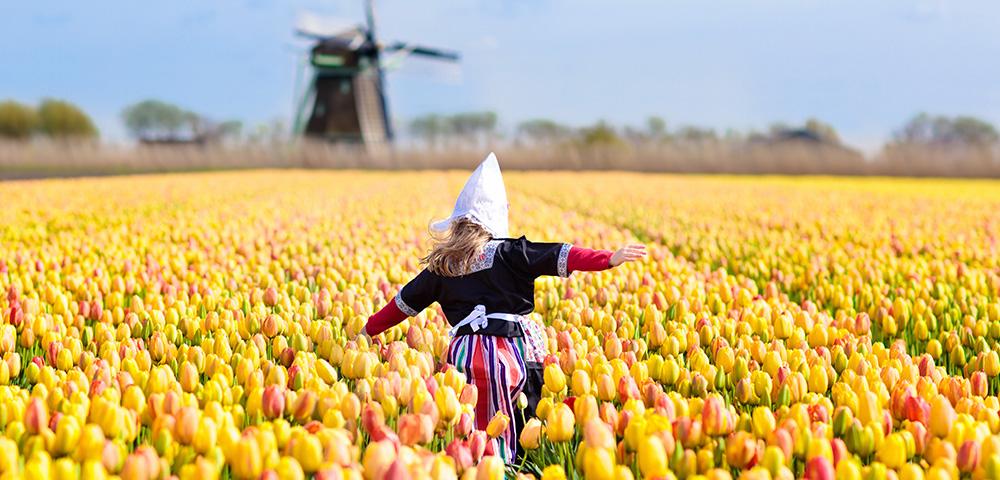 Amsterdam's Tulips & Historic Normandy Image 1