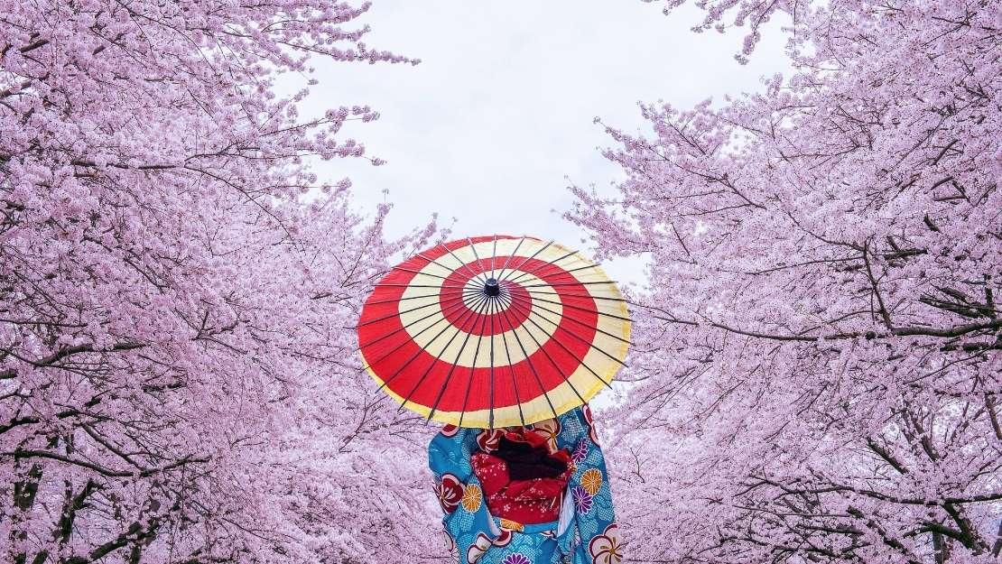 Luxury Spring Blooms of Japan - Hero Image