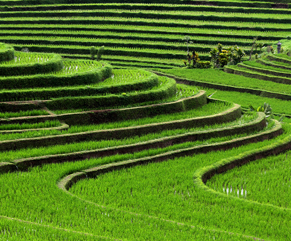 Bali - Gallery Image