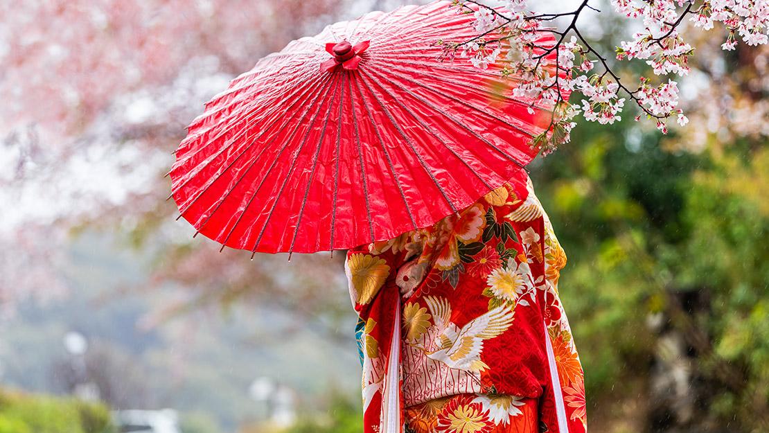 Cherry Blossom Adventure - Hero Image
