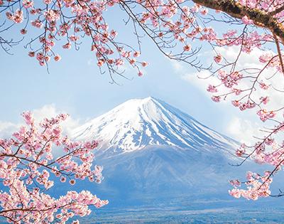 Cherry Blossom Adventure - Gallery Image