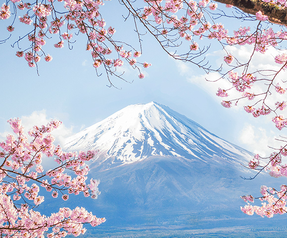 Japan's Cherry Blossoms in 2023 Image 2
