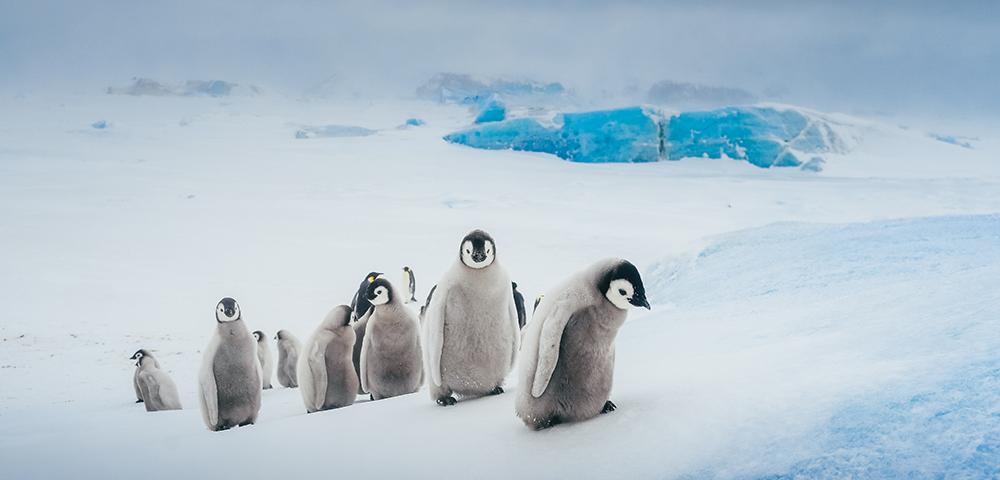 Bucket List Antarctic Adventure Main Image