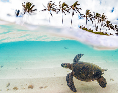 Discover the Hawaiian Islands in 2022 - Gallery Image