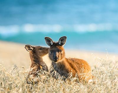 Australian Discovery | Kakadu, Kangaroo Island & Beyond - Gallery Image