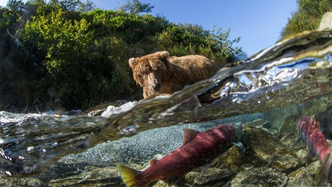 Fire and Ice – Hawaii to Alaska - Hero Image