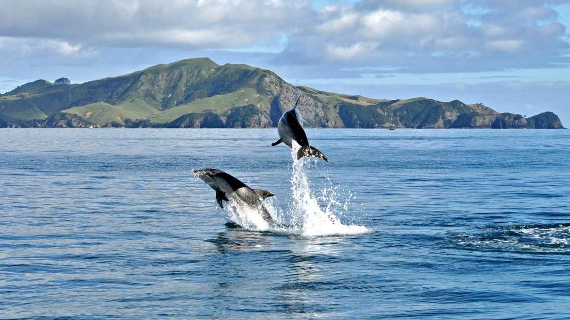 Christmas & New Year Voyage Around New Zealand - Hero Image