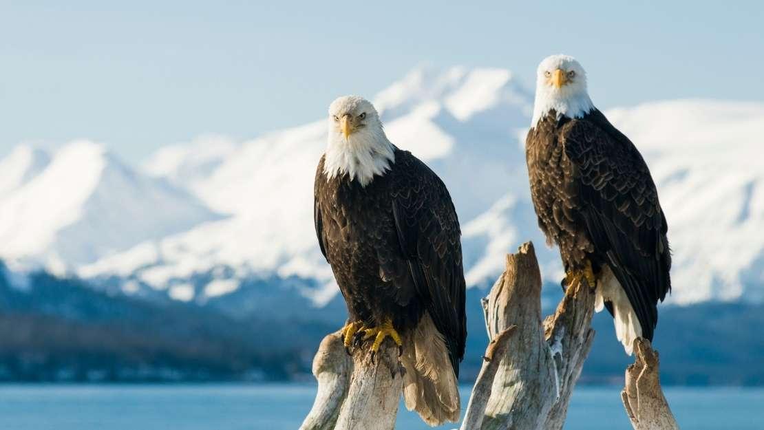 Luxury Alaskan Coastal Discovery with Regent Seven Seas - Hero Image