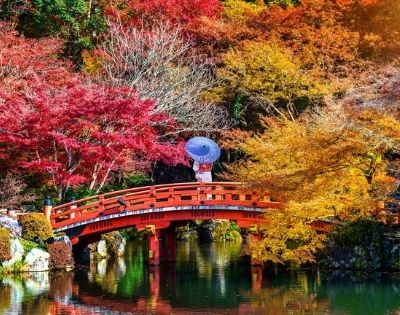 Luxury Japan – Autumn Colours - Gallery Image
