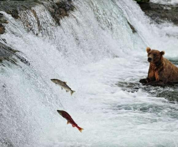Majestic Canada & Alaska Discovery Image 1