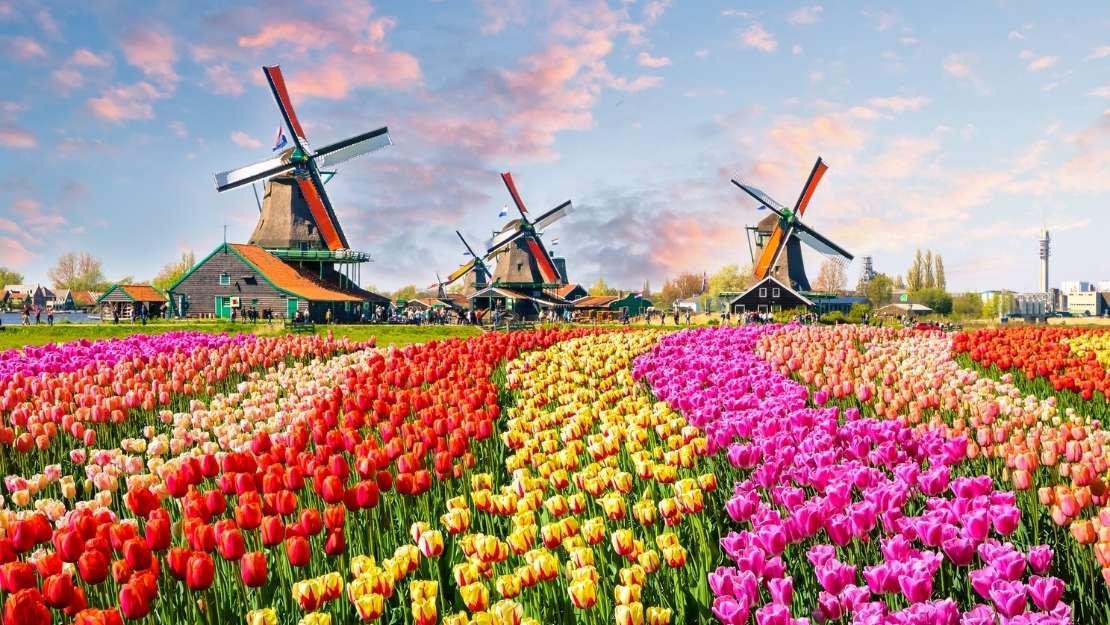 Amsterdam's Tulips & The British Isles - Hero Image