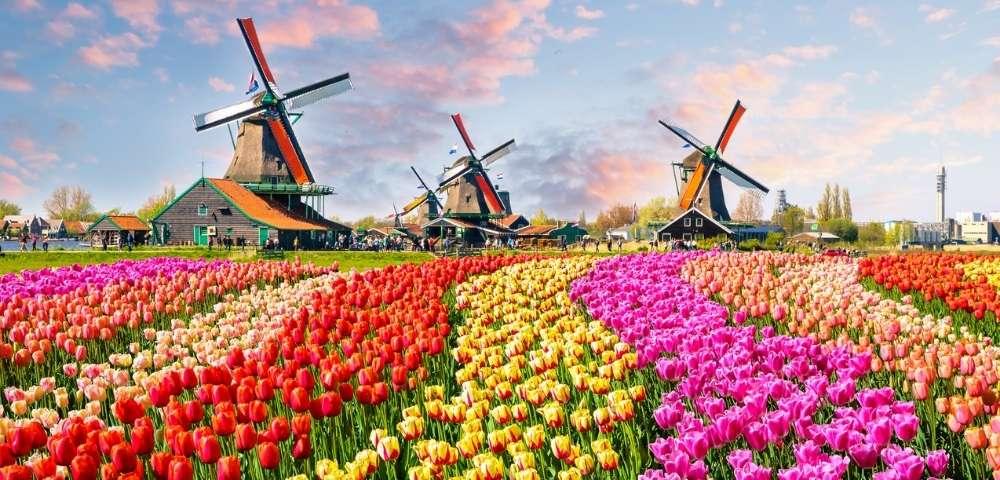 Amsterdam's Tulips & The British Isles Main Image