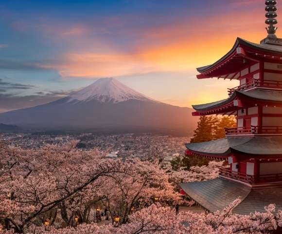 Luxury Cherry Blossom Discovery Image 1