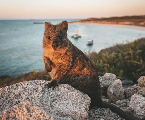 Royal Australian Journey Image 1