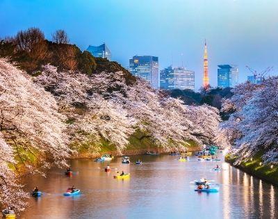 Luxury Spring Blooms of Japan - Gallery Image