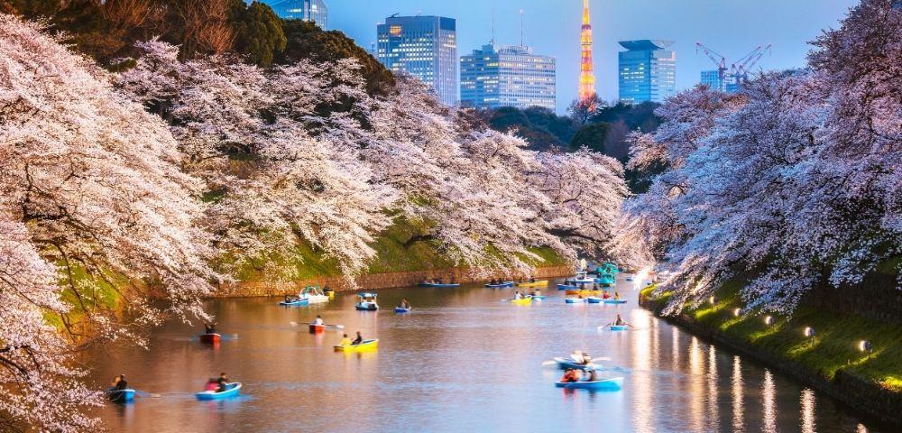 Luxury Spring Blooms of Japan Image 1