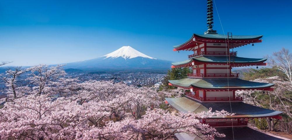 Luxury Spring Blooms of Japan Image 2
