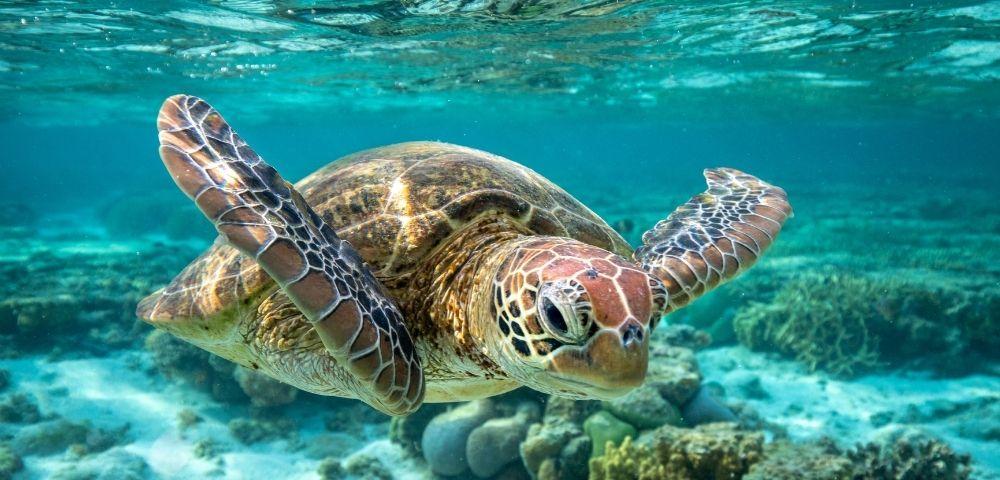 Fremantle Grand Australian Discovery Image 2
