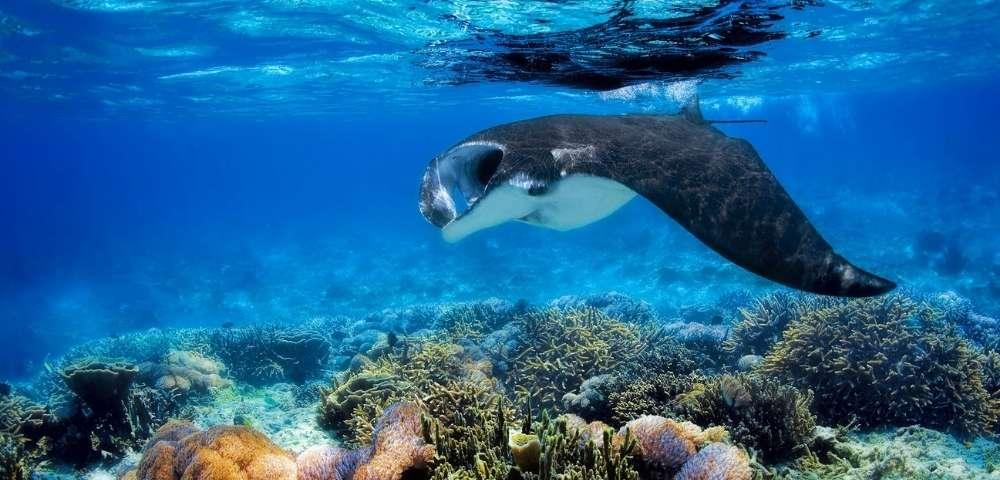 Escape to Fijian Island Paradise Image 3