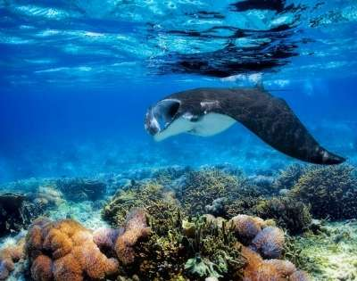 Escape to Fijian Island Paradise - Gallery Image
